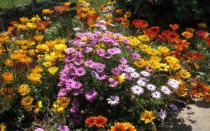 Цветы для клумбы: какие выбрать и как ухаживать?