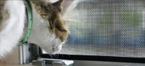 Сетка антикошка: достоинства и недостатки защитных решёток для домашних любимцев