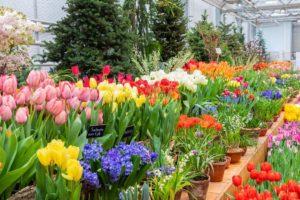 Растения весенних цветников: виды и названия