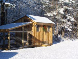 Зимние курятники: проекты и процесс строительства