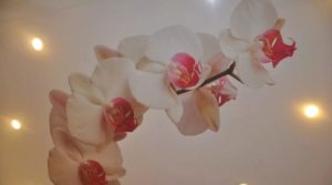 Натяжной потолок с орхидеей: оригинальный декор в интерьере