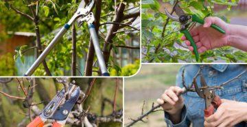 Тонкости выбора секаторов для обрезки высоких деревьев